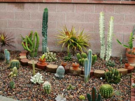 Lessons from a cactus for Cactus garden designs